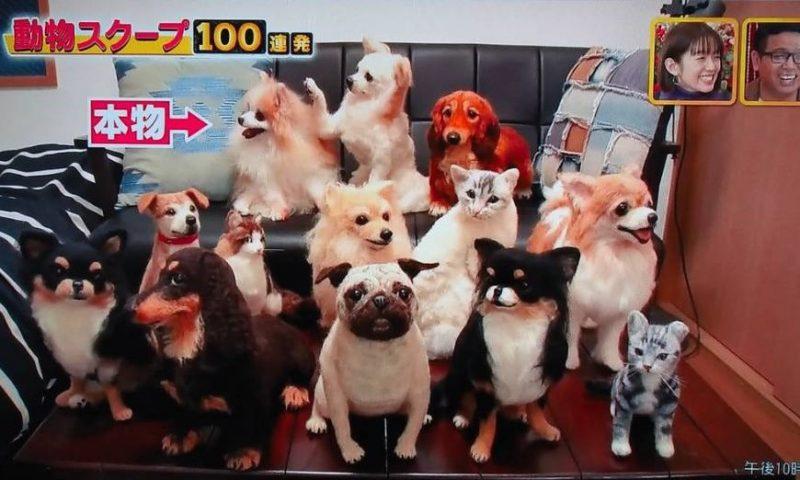 笑える 泣ける 動物 スクープ 100 連発